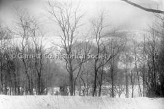 0892-Trees-Winter-Sc44B56E
