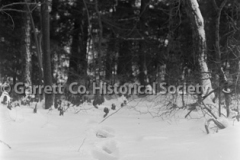 0893-Winter-Scene-893
