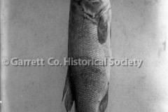 0908-Large-Fish-908