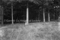 0918-Trees-918