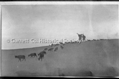 1106-Sheep-Descendin44B8EB