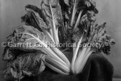 1110-Vegetable-Still44B8F9