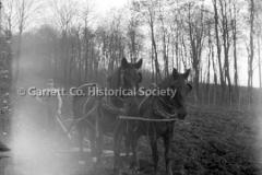 1196-Team-of-Horses-44B952