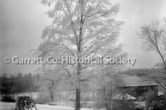 1275-Tree-Stump-in44B9A2