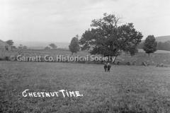 1287-_Chestnut-Time_-137A