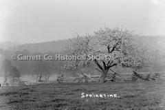 1317-_Springtime_-Tr44B9CE