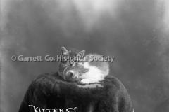 1359-Kittens-212A