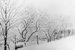 1386-Trees-in-Winter-239A