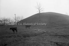 1479-Cows-on-Hillside-333A