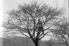 1487-Man-in-Tree-341A