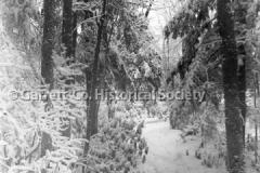 1543-Snow-Scene-Elk-44BAF7