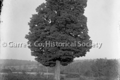 1619-Lone-Tree-476A