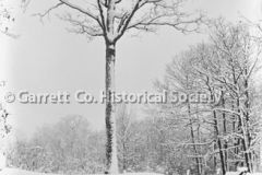 1811-Snow-656A
