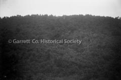 1826-Trees-671A