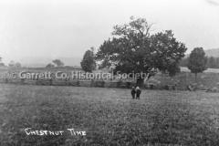 1890-Chestnut-Time-750A