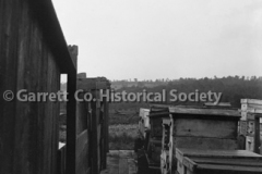 1963-Apiary-823A