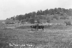 1973-Pasture-Horse44BEC2