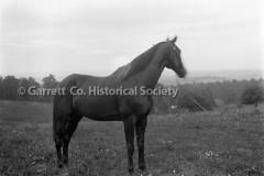 2049-Horse-907A