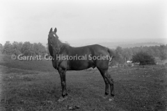 2050-Horse-908A