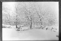 2063-Trees-and-Snow-44BF54