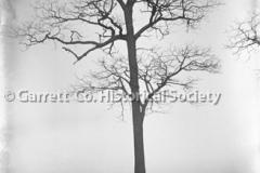 2143-Tree-3B