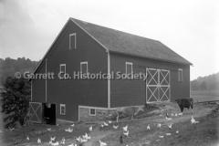 2200-Barn-Chickens-61B