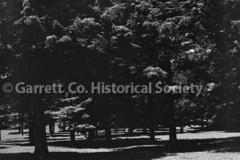 2374-Trees-234B