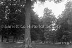 2385-Sugar-Tree-Gr44C0C9