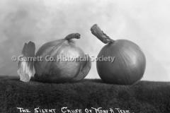 2499-Onions-Still-Life-11C