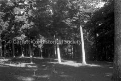 2589-Grove-of-Trees-102C