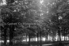 2594-Grove-of-Trees-107C