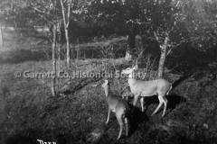 2610-Deer-124C
