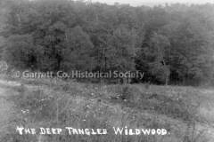 2736-Tangled-Wildwood-271C