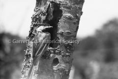 2753-Woodpecker-198C