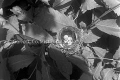 2754-Birds-Nest-199C
