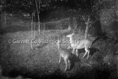2764-Deer-210C