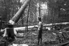0265-Felling-Trees-J44B376