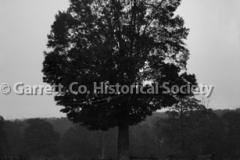 0484-Tree-Moonlight-484