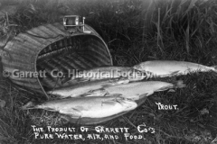 0487-Brook-Trout-487