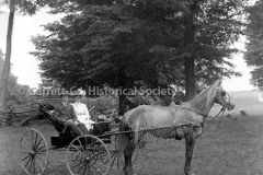 0341-Horse-Buggy-341