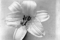 0424-Lily-Bolssom-424