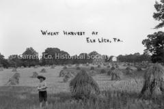 0559-Wheat-Harvest-E44B496