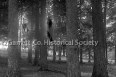 0593-Sugar-Trees-593