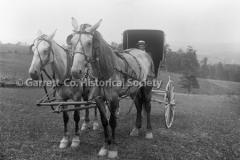 0731-Horses-Buggy-731