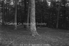 0746-Trees-746